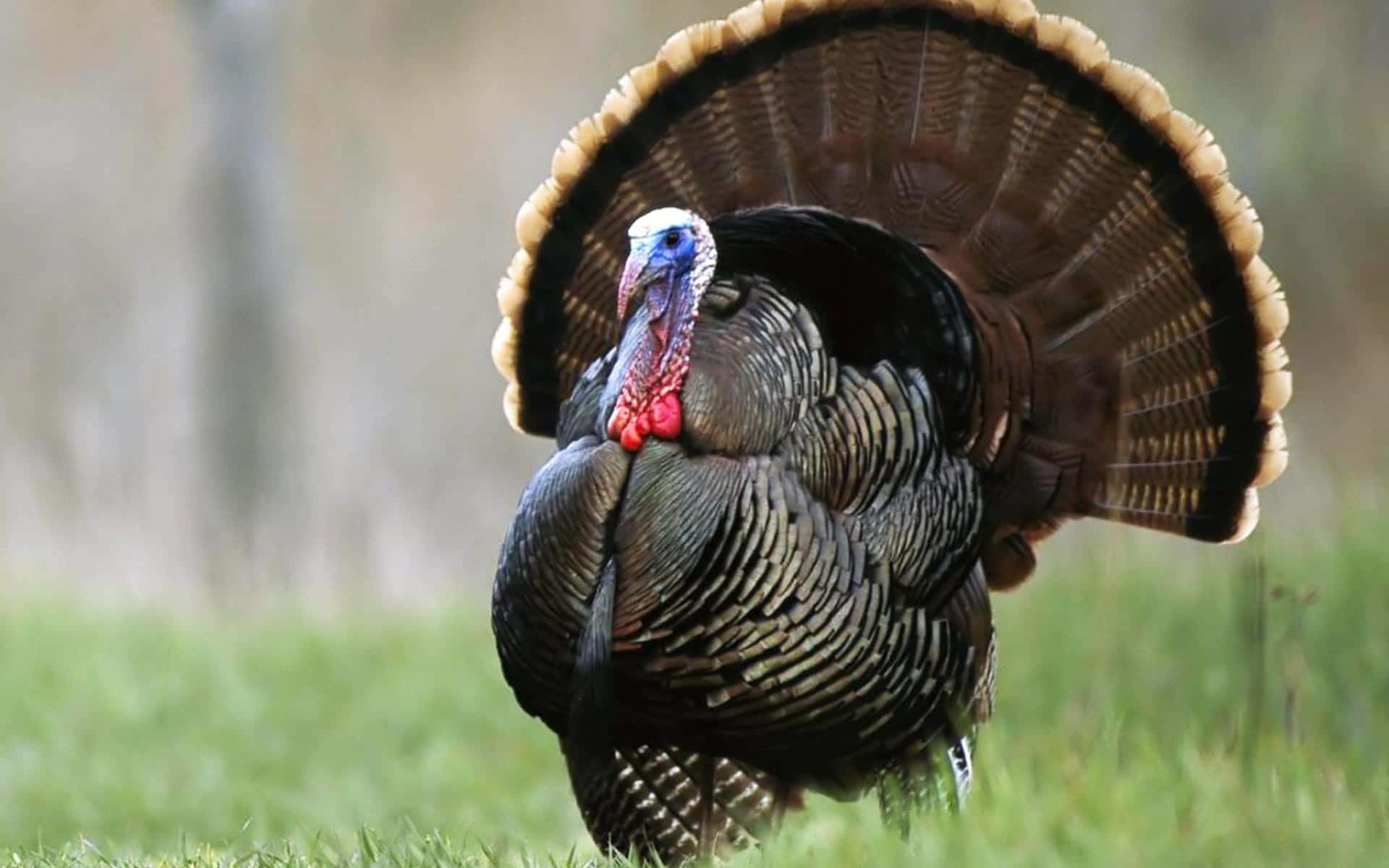 Ever Wonder What It Would Be Like To Hit a Wild Turkey With Your ...