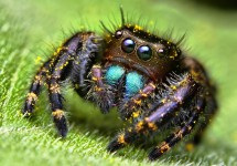 spider-normal