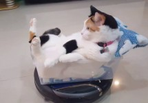 Funny-Roomba-Cat-Rides-roomba-hoover-like-a-boss.jpeg