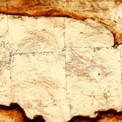 Map-of-US-shutterstock_545172301.jpg