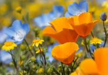 obit flowers 2