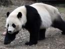 Xinhua/Yin Bogu via Getty Images