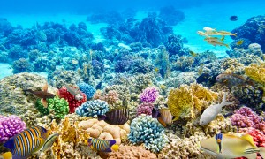 little cayman-undersea-and-reef-snorkel-GCZ6-mosaic