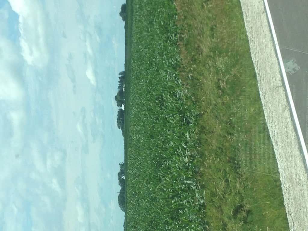 Crop Damage 7 7 16 012