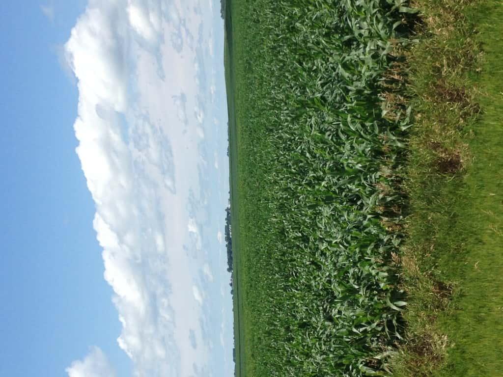 Crop Damage 7 7 16 007