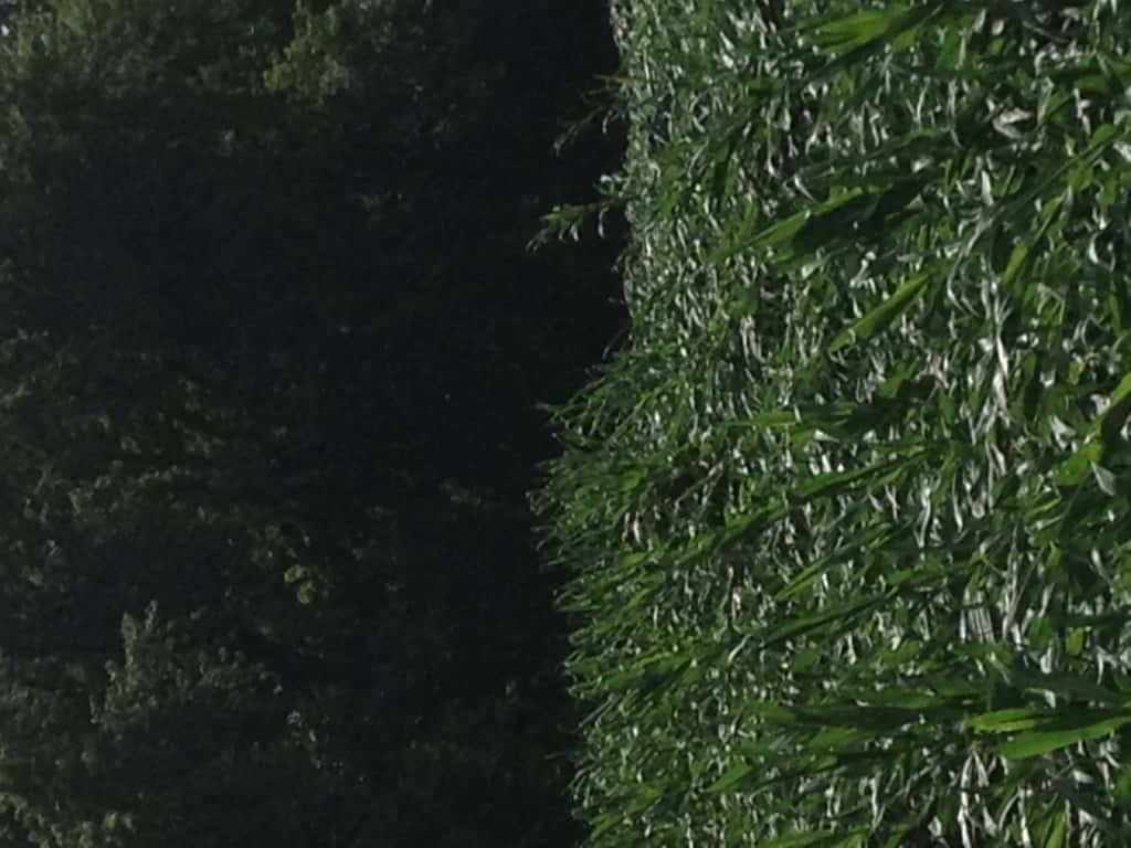 Crop Damage 7 7 16 024
