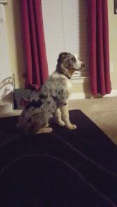 Lost-Dog-Caroline