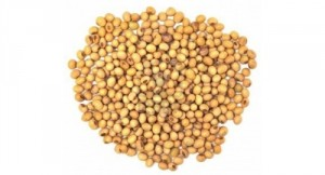 Soybeans  500 X 270