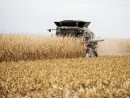 Corn harvest 500 X 270