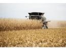 Corn Harvest 500 x 380