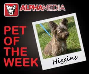 Pet of the week – Higgins