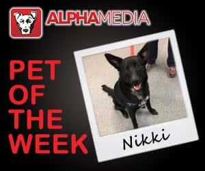 Pet of the week – Nikki