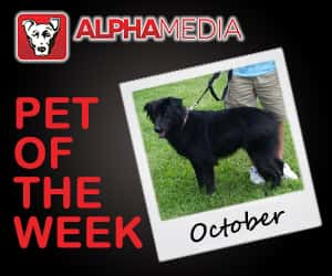 Pet of the week – October