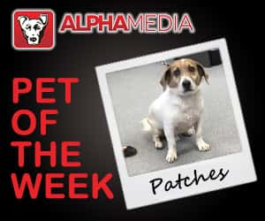 Pet of the week – Patches