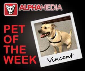 Pet of the week – Vincent