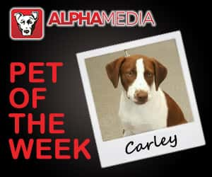 Pet of the week – Carley