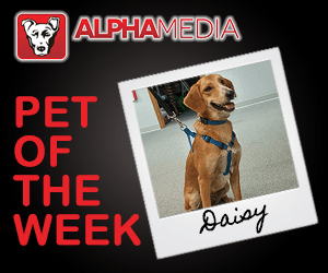 pet of the week – daisy