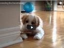 Puppy vs Doorstop