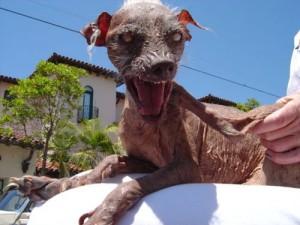 ugly Dog 2011 winner