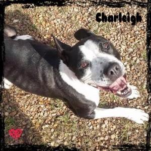 charliegh