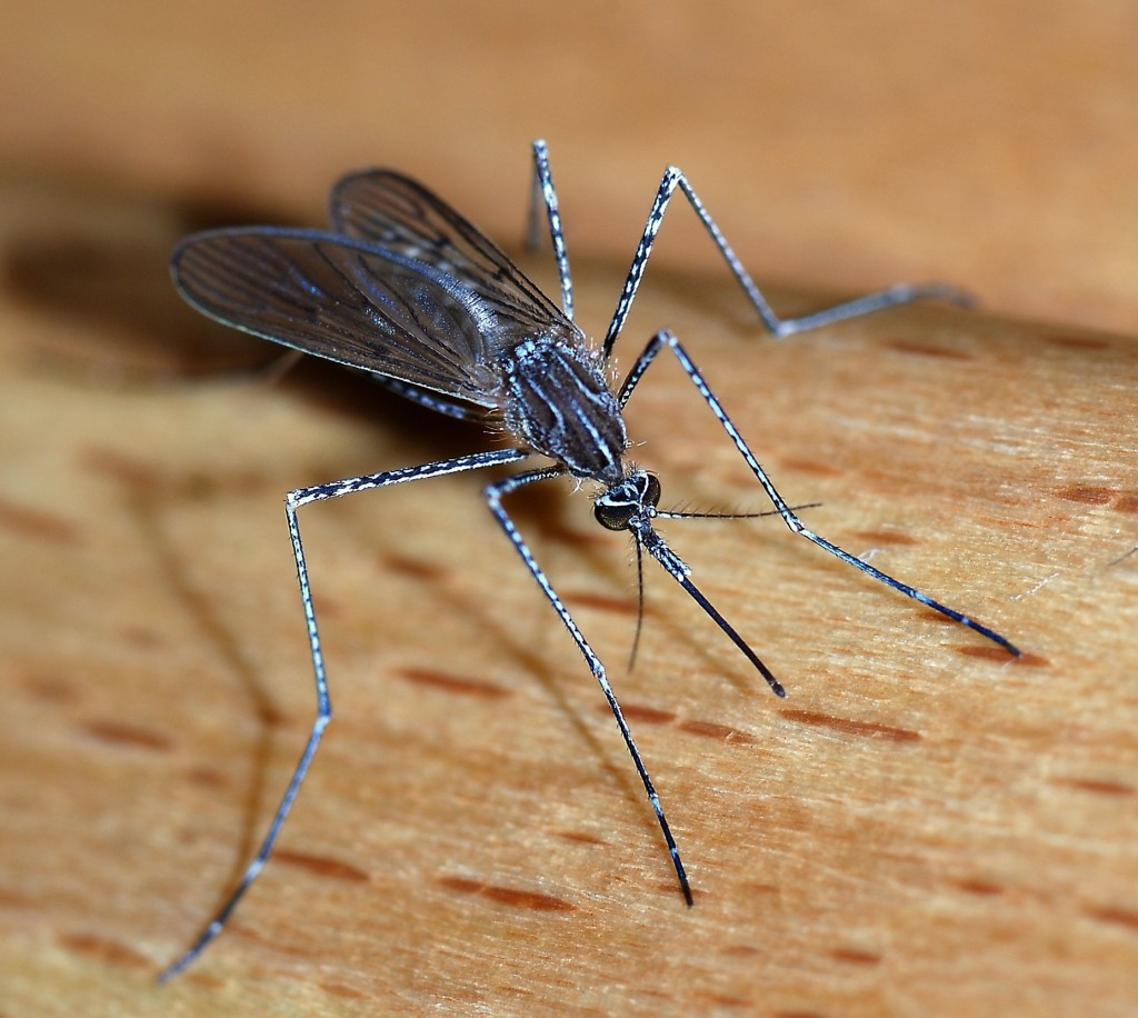 Four Southern Illinois counties deemed high risk for Zika