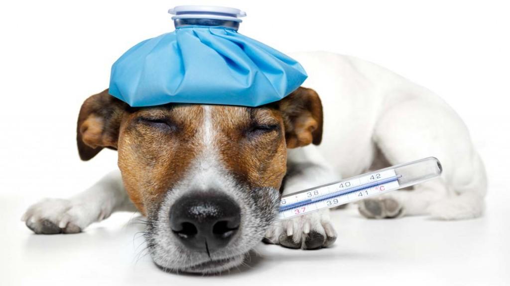 CDC: Flu virus spreading rapidly here