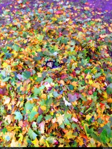 Find the kid in the leaf pile