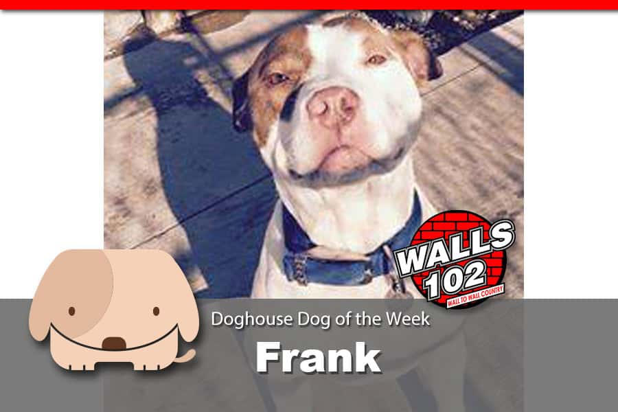dotw-frank