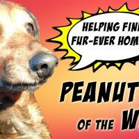 peanutscover