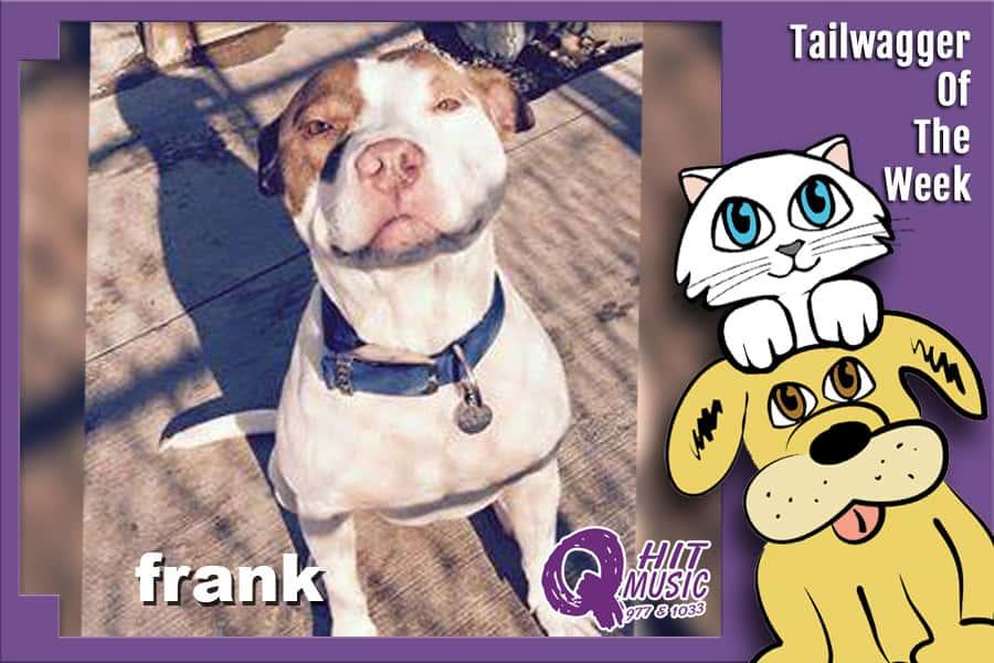 twotw-frank