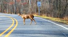 DNR Hosts Seminars On Spread Of Chronic Wasting Disease In Iowa's Deer Populations