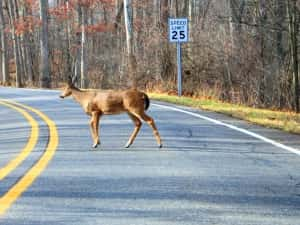 DNR Hosts Seminars On Spread Of Chronic Wasting Disease In Iowa's Deer Populations