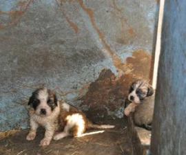 Two Area Breeders Included On Humane Society Horrible Hundred Report