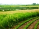Calhoun County Farm Selected As Site For Water Quality Research Project