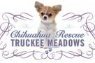 chihuahua rescue 2016