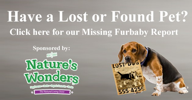 Flipper Lost 7 Found Pets
