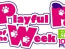 playful-pet-of-the-week