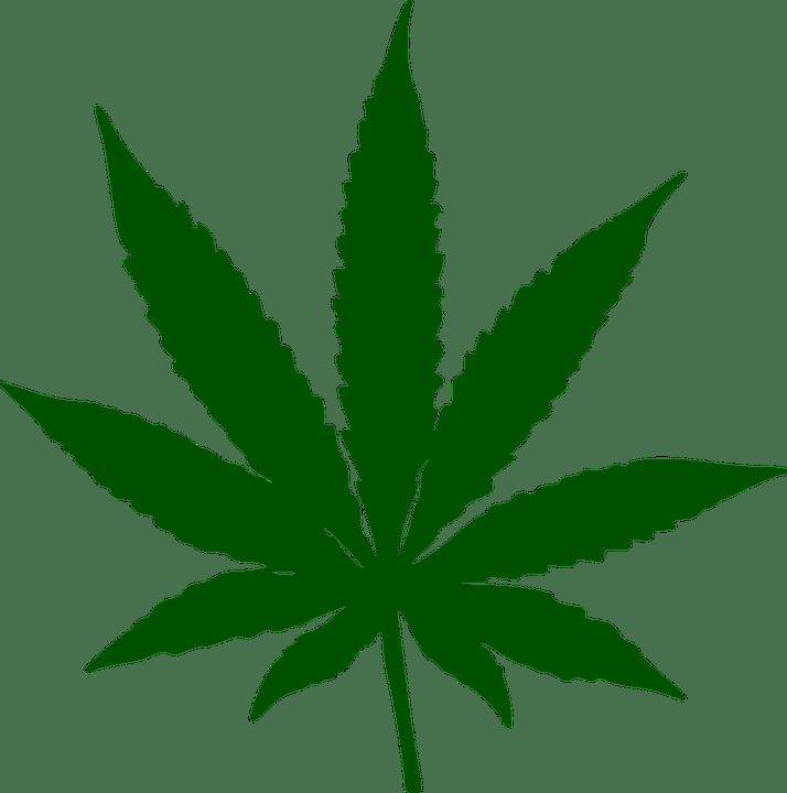 marijuana-34353_960_720
