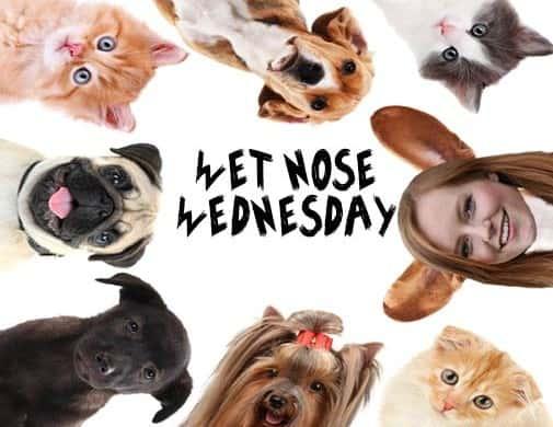 Wet-Nose-Wednesday