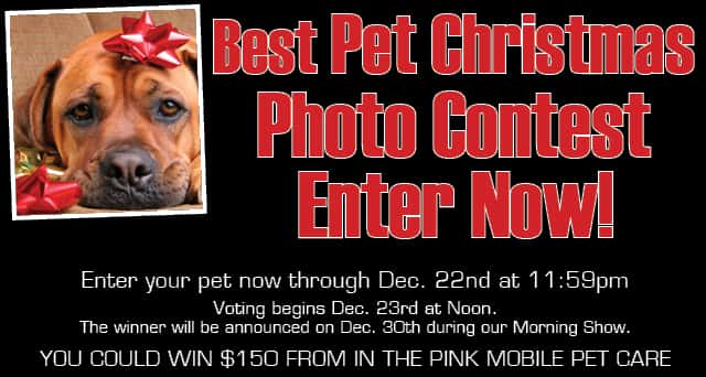 PetContest
