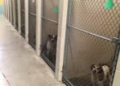 St-Joseph-Animal-Shelter-Dogs-200x150