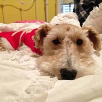 General Manager Craig Olive's dog.