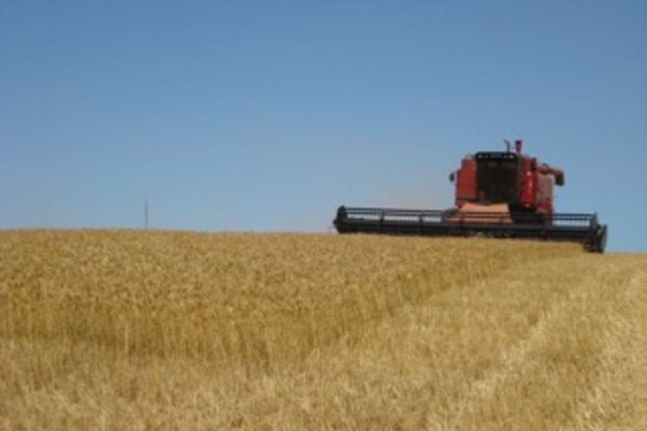 070814 Wheat Harvest