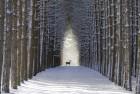 deer-snow-free-wallpapers-1600x1200