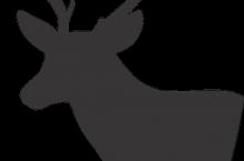 deer-1529440_640
