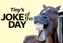 Tiny_joke-of-day_220x150