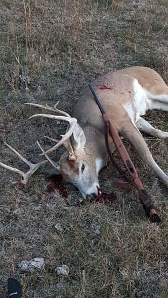 Brent Alder's Deer