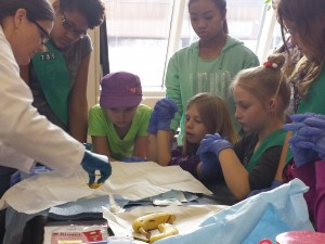 Dr. Angela Alfaro instructs Girl Scouts