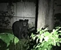 Bear Beloit 052816