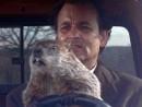 gal-groundhog-day-murray2